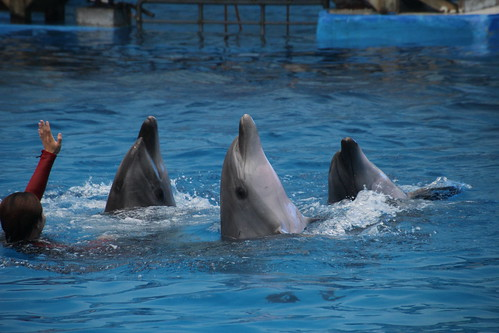 Dolphin performance at Tianjin Ocean Park, China June 2014