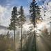 November Sun by Don White (Burnaby) Thanks for the Three Million V