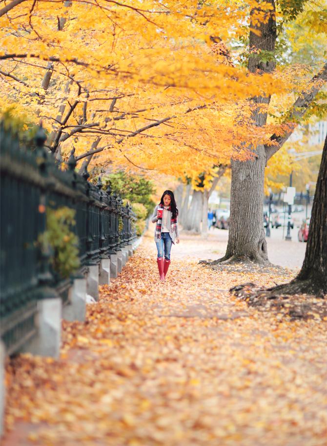 boston public garden fall foliage