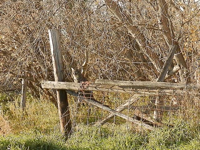 Walker on a fence
