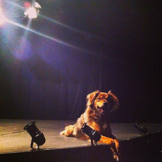 Bravo Bell - the Theatre Dog