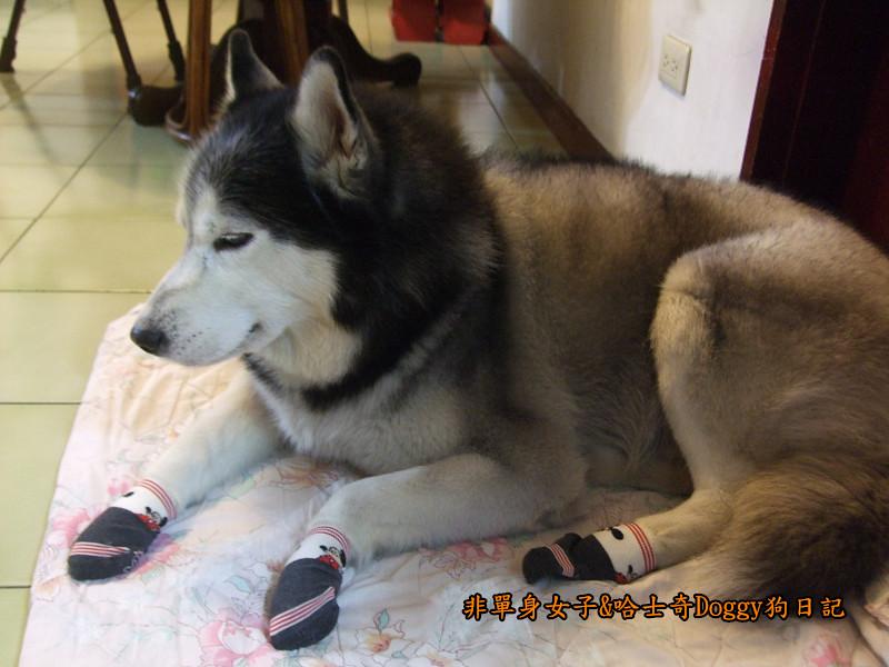 Doggy穿兒童襪13
