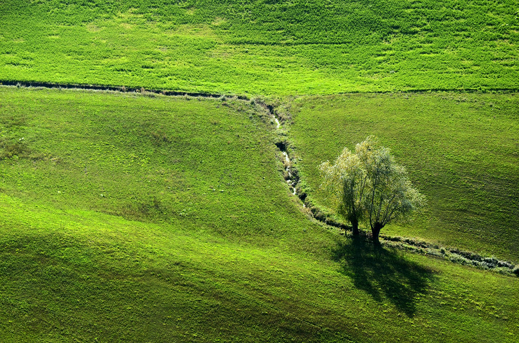 Alone Tree In A Green Field