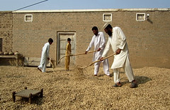 Farmers spread their produce under the sun in the courtyard of their home in Ghool village of the Chakwal district, about 90 km (56 miles) southeast of Islamabad, Pakistan's capital. Saleem Shaikh/IPS