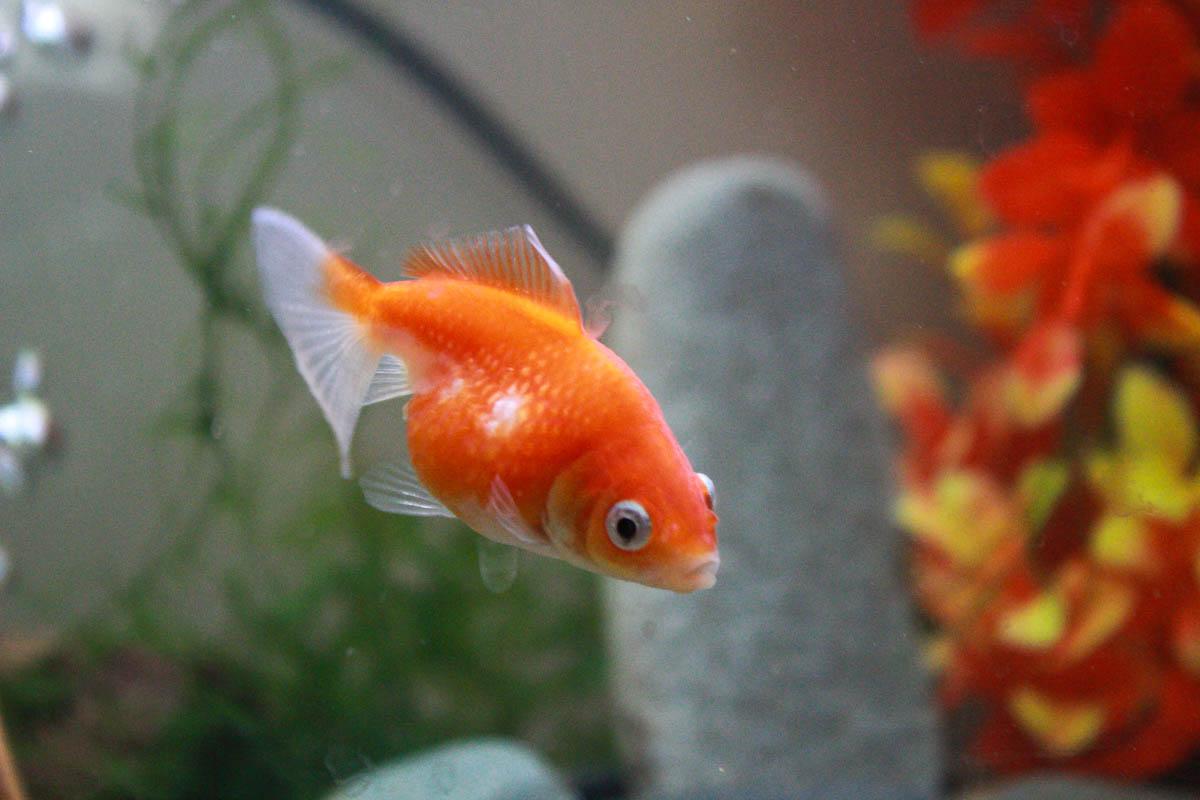 Aquarium de Sam Soul 23826827265_364dc933f5_o