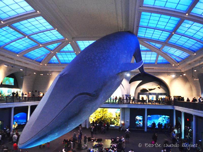 Que_ver_Nueva_York_Museo_Americano_de_Historia_Natural