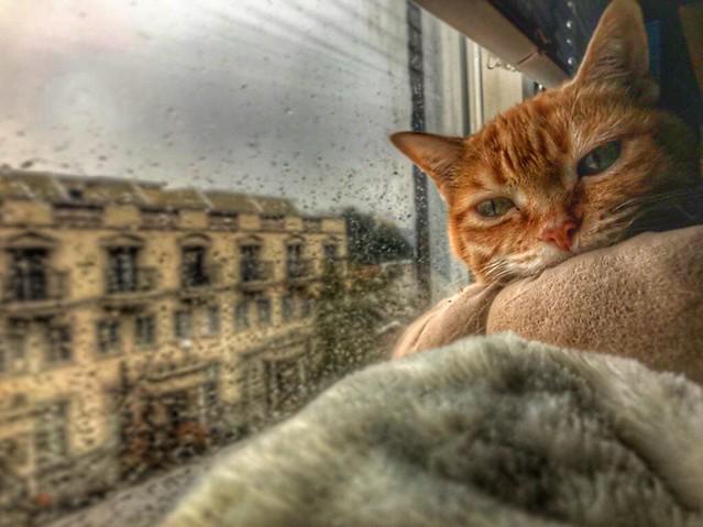 Toronto Ontario Canada ~ Sleepy Cat ~ Burp on window Sill