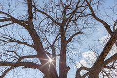 Sun peeking through tree