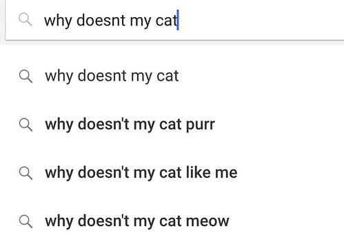 why doesnt my cat