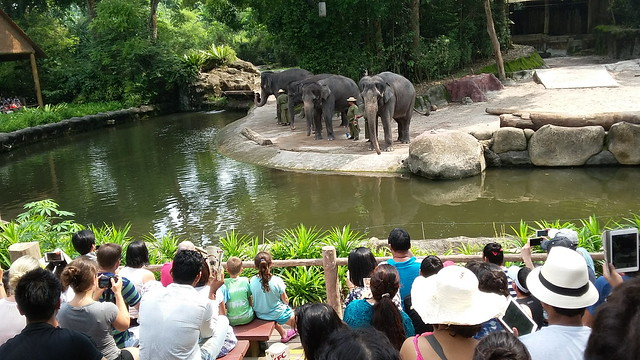Singapore Zoo: the elephant show