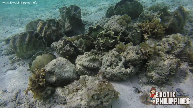 Malcapuya Island Coron Palawan Philippines