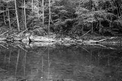 Reflections on the Shepaug