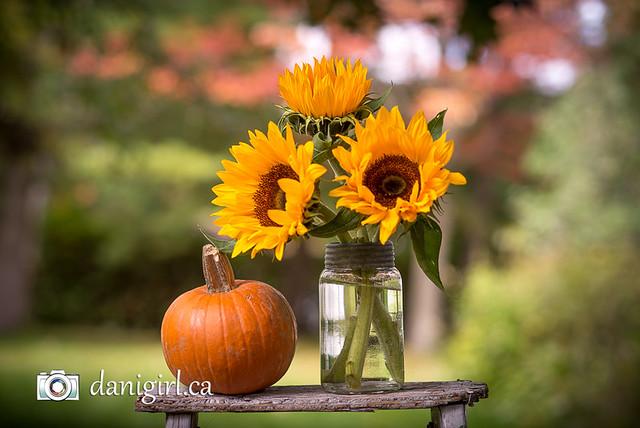 Autumn tableau :)
