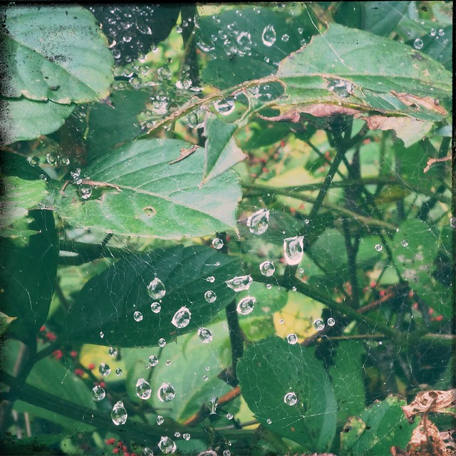 Waterdrops on spider web