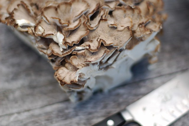 Hen-of-the-woods mushroom also known as Maitake mushroom by Eve Fox, the Garden of Eating, copyright 2015