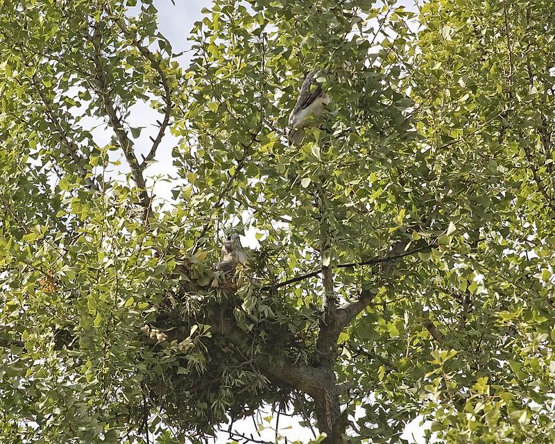 Christo & Dora work on their nest