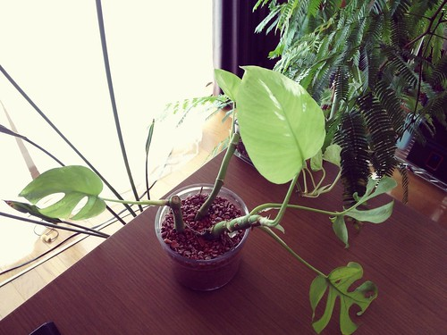 monstera_newlwaf2015(1)