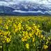 Summer Field in Jackson Hole by Jeff Clow