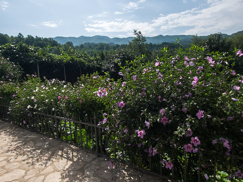 montenegro цветы черногория kolašin
