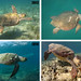 Achilles' injury over the years by Sea Turtle Photography