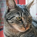 Happy Caturday by Ghita Katz Olsen