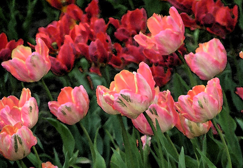 Watercolor Red & Pink Tulips