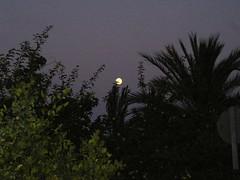 Luna llena en la huerta
