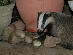 Badgers Fast Food