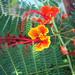 Delightful Vivid Colors by beckerpecker