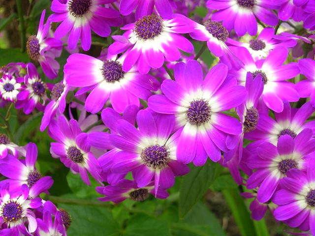 Paloma gardens