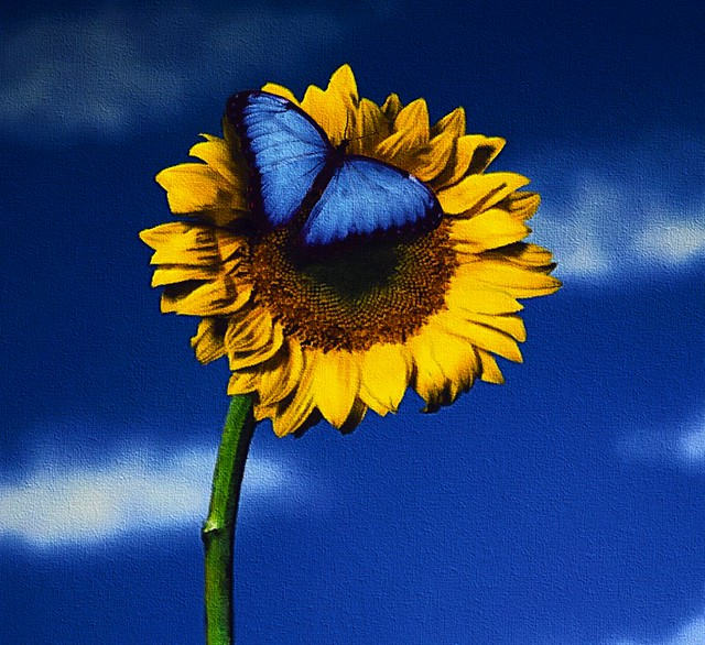 Butterfly on Sunflower | Flickr - Photo Sharing!