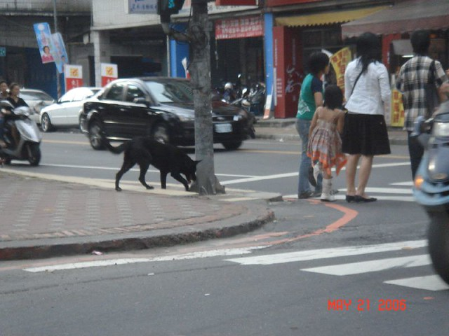 Stray black dog in Hsinchuang, Taiwan | Flickr - Photo Sharing!