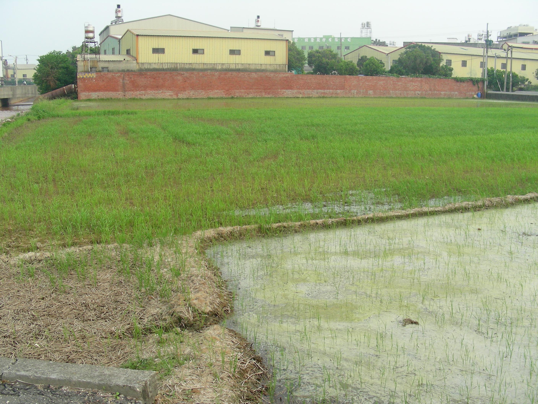 受重金屬鎘污染的水稻田 Heavy metal Cadmium polluted rice fields