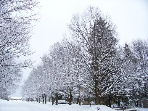 trees winter snow snowstorm january snowytrees c330 pellston