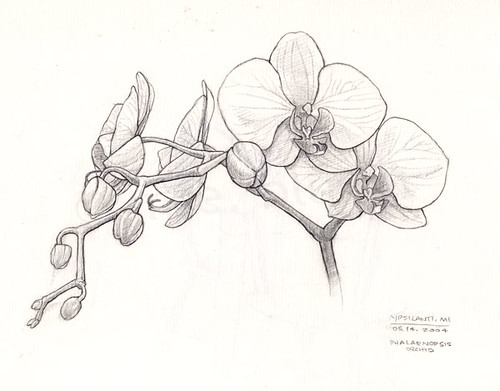 Orchid Line Drawings Orchid Drawing Black And