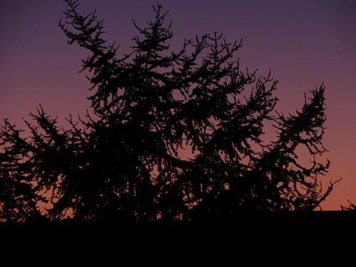santa naturaleza santafe argentina sunrise purple natura lila amanecer rosario fe biology pino púrpura purplesky biología nataure amanecerdesdeelbalcón pueplesunrise nadaquedecir poila