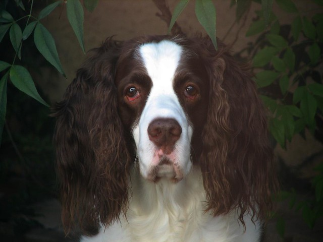 Image Result For Noble Beast Dog
