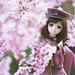 Sakura Marching On by nogo171