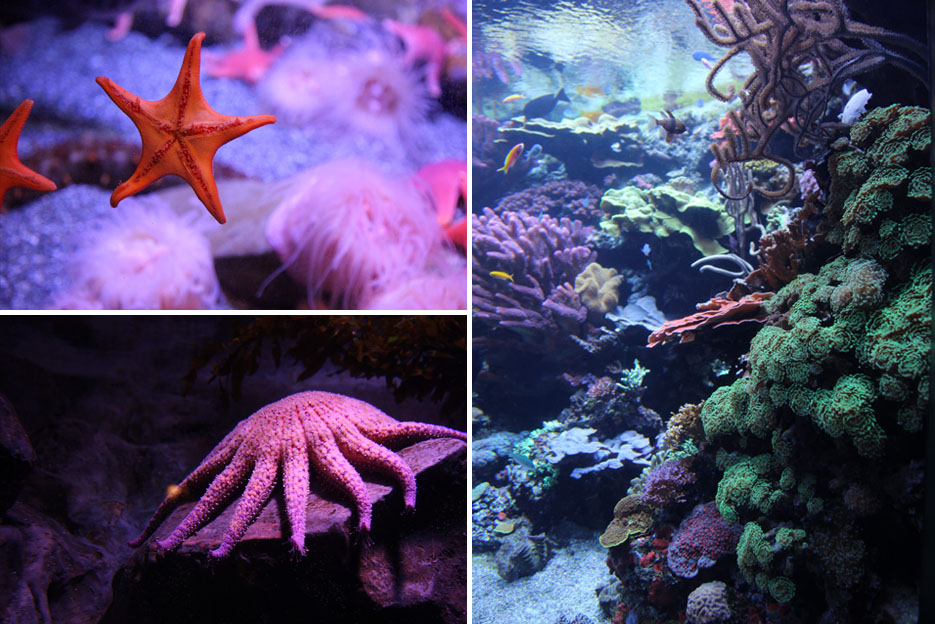 070915_aquarium16