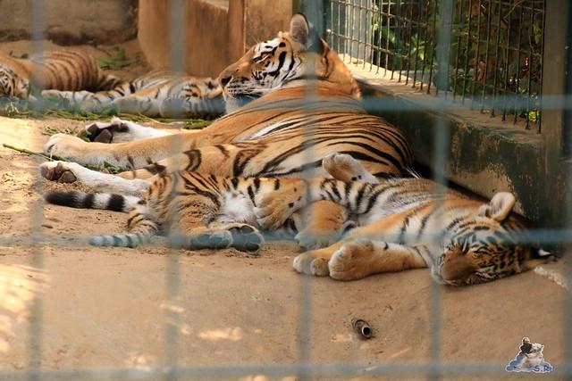 Tierpark Berlin 16.08.2015  080