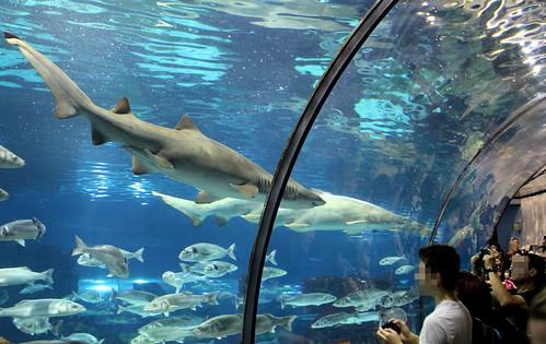 aquarium-21