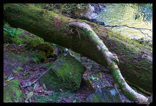 Saltando los troncos de madera