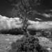 tree at the GC_8008551-Edit by steve bond Photog