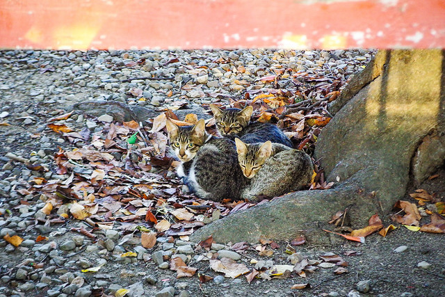 Today's Cat@2015-10-04