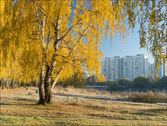 Russia. Balashikha. Golden Autumn.