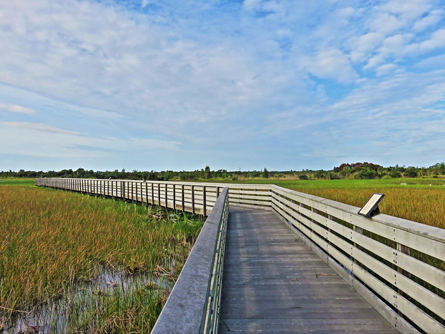 Chapel Trail boardwalk 20151017
