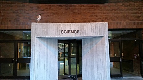 The Science Building Faux Owl - 20151204_072312