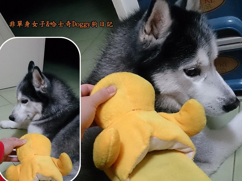 doggy黃色小鴨鞋10