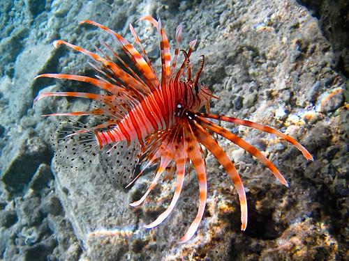 20110504-080937-Hurghada
