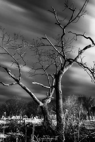 2017 bw blackwhite connecticutphotographer guilford january landscape landscapephotography nature naturephotography outdoors unitedstates chaffinchislandpark digital connecticut us